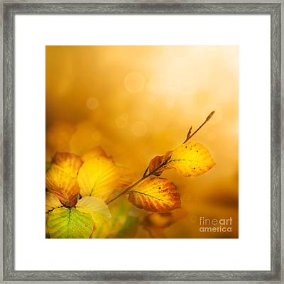 Autumn Leaves Framed Print by Mythja  Photography