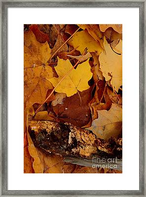 Autumn Leaves Of Yellow And Brown Framed Print by ImagesAsArt Photos And Graphics