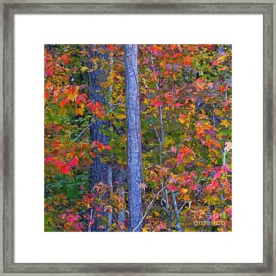 Autumn Leaves Framed Print by Scott Cameron