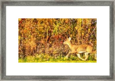 Autumn Light Deer In Forest Framed Print by Dan Sproul