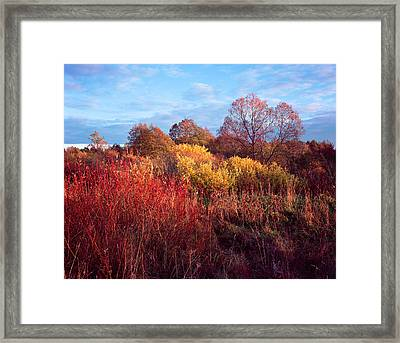Autumn Light Framed Print by Romeo Koitmae