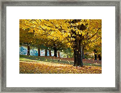 Autumn Maple Tree Fall Foliage - Wonderland Framed Print by Dave Allen