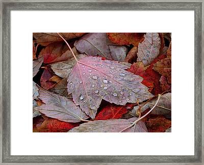 Autumn Melange Framed Print by Rona Black