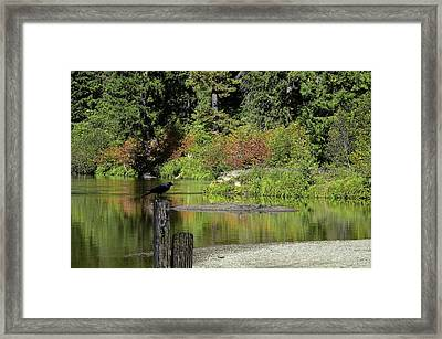 Autumn Melody Framed Print by Diane Schuster