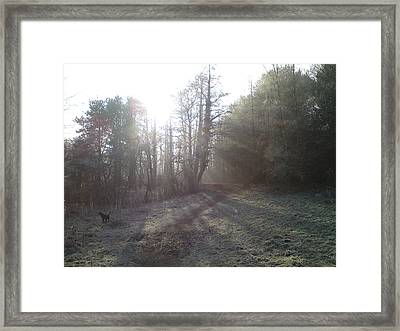 Autumn Morning 3 Framed Print by David Stribbling