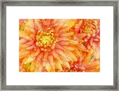 Autumn Mums Framed Print by Heidi Smith