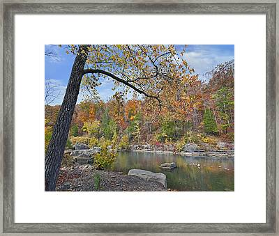 Autumn Oak And Hickory Forest Framed Print by Tim Fitzharris