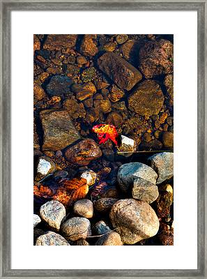 Autumn On The Shore Framed Print by David Patterson