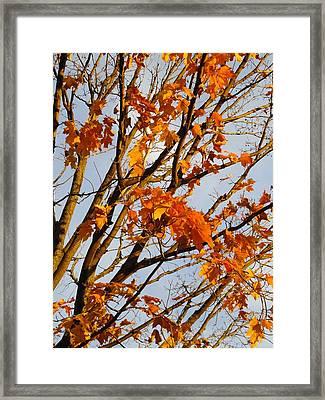 Autumn Orange Framed Print by Guy Ricketts