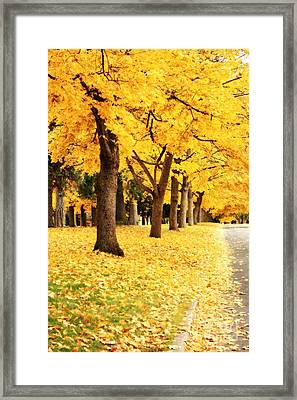 Autumn Perspective Framed Print by Carol Groenen