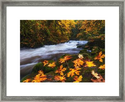 Autumn Returns Framed Print by Darren  White