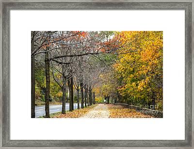 Autumn Rider Framed Print by Mark Ayzenberg