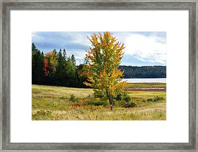 Autumn Shores Of Maine Framed Print by Lena Hatch