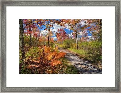 Autumn Splendor Framed Print by Bill Wakeley