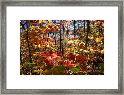 Autumn Splendor Framed Print by Elena Elisseeva