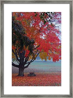Autumn Splendor Framed Print by Lisa Phillips