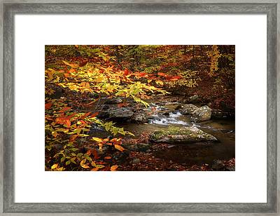 Autumn Stream Framed Print by Bill Wakeley