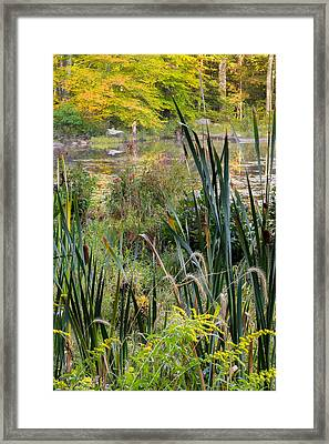Autumn Swamp Framed Print by Bill Wakeley