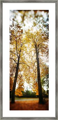 Autumn Trees In A Park, Volunteer Park Framed Print by Panoramic Images