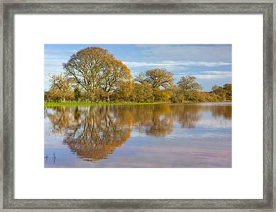 Autumn Trees Framed Print by Sebastian Wasek