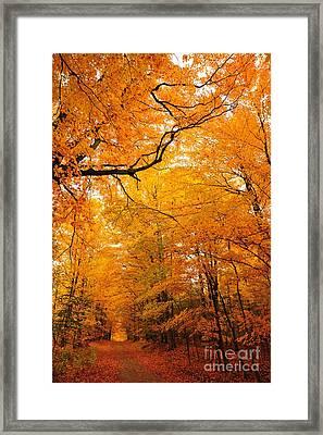 Autumn Tunnel Of Trees 12 Framed Print by Terri Gostola