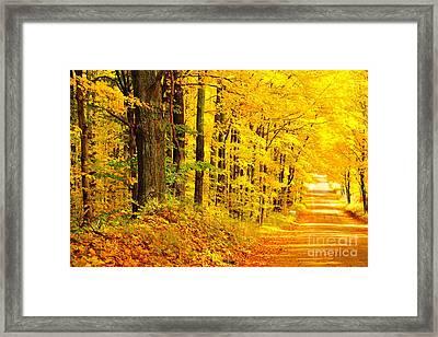 Autumn Tunnel Of Trees 36 Framed Print by Terri Gostola
