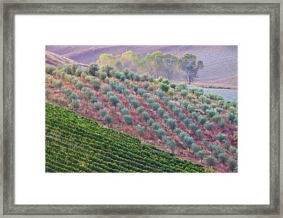 Autumn Tuscan Fields Framed Print by Eggers   Photography