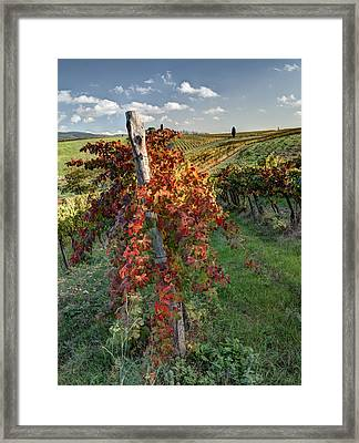 Autumn Vines Framed Print by Eggers Photography
