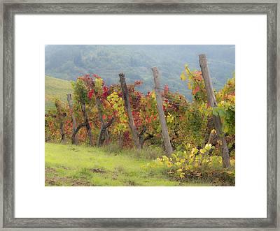 Autumn Vineyard Framed Print by Eggers   Photography