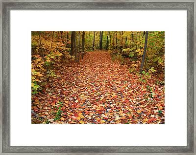 Autumn Walk In Ohio Framed Print by Dan Sproul
