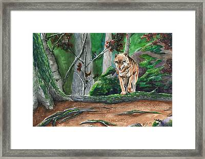 Autumn Wolf Framed Print by Kyle Gray