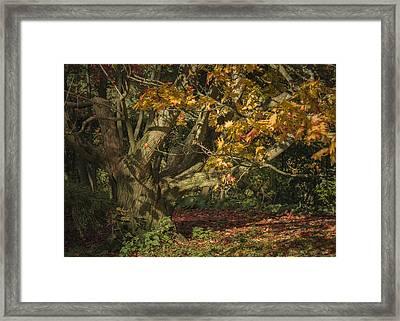 Autumn Woodland Framed Print by Chris Fletcher