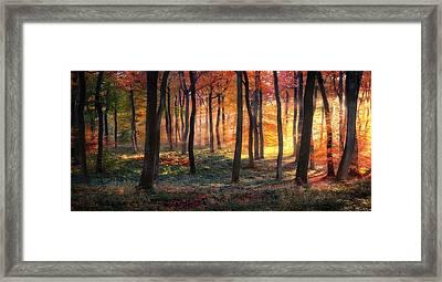 Autumn Woodland Sunrise Framed Print by Photokes