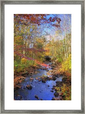 Autumn Woods Framed Print by Joann Vitali