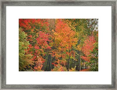 Autumn Woods Framed Print by Mary Carol Story
