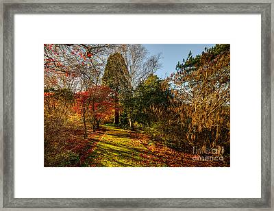Autumnal Forest Framed Print by Adrian Evans