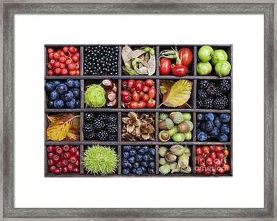 Autumnal Harvest Framed Print by Tim Gainey