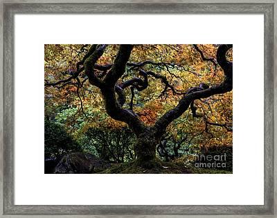 Autumn's Canopy Framed Print by Mike Dawson