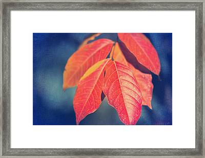 Autumns End Framed Print by Heidi Smith