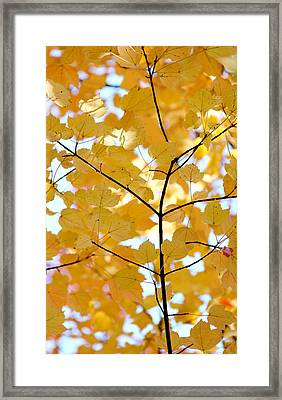 Autumn's Golden Leaves Framed Print by Jennie Marie Schell