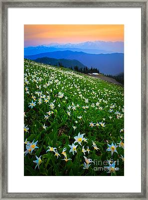 Avalanche Lily Field Framed Print by Inge Johnsson