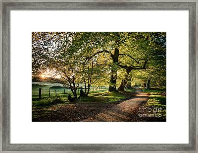 Avenue Of Light Framed Print by Tim Gainey
