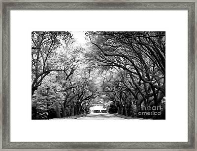Avenue Of Oaks Framed Print by John Rizzuto