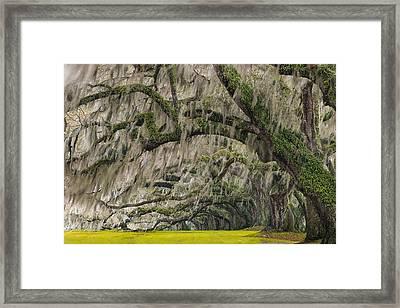 Avenue Of Oaks Framed Print by Joseph Rossbach