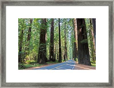 Avenue Of The Giants Framed Print by Heidi Smith