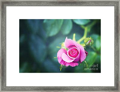 Awakening Framed Print by Ivy Ho