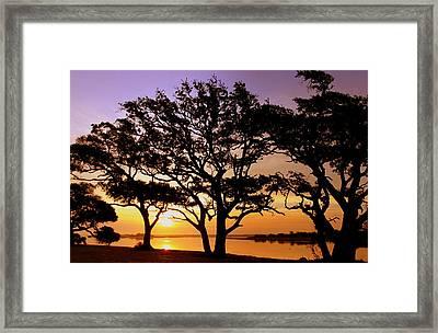 Awakening Framed Print by Karen Wiles
