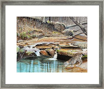 Away From Cover - Bobcat Framed Print by Phillip  Powell