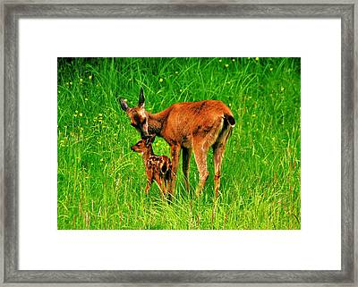 Aww Mom Framed Print by Benjamin Yeager