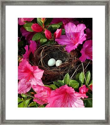 Azalea Surprise Framed Print by Karen Wiles